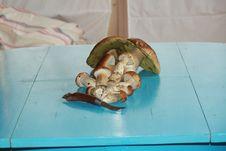 Free Mushrooms Stock Images - 16482114
