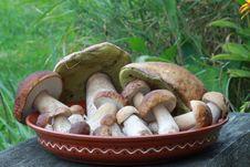 Free Mushrooms Royalty Free Stock Photo - 16482175