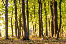 Free Forest Royalty Free Stock Photos - 16482188