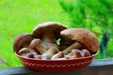 Free Mushrooms Royalty Free Stock Images - 16482209