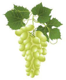 Free White Grape Stock Image - 16482551