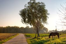 Free Horse Stock Image - 16482601