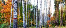 Free Forest Royalty Free Stock Images - 16482659