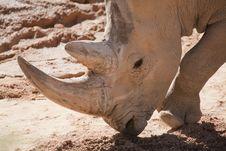 Free Rhinoceros Royalty Free Stock Image - 16482756