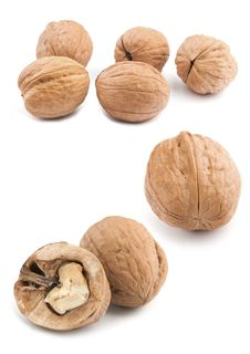 Free Circassian Walnut Stock Photography - 16483392