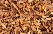 Cut Dried Leaves Of Tobacco Stock Photo