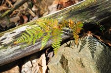Free Fern In The Forest Stock Photography - 16485202