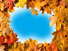 Free Frame Of Maple Leaves. Stock Image - 16485391