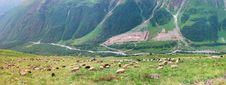Free Herd Sheep In Mountain Stock Photo - 16485690