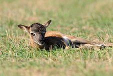 Free Antelope Stock Photo - 16486410