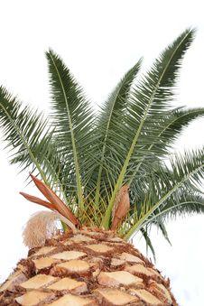 Free Palm Tree. Stock Photos - 16486743