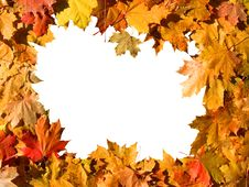 Free Frame Of Maple Leaves. Royalty Free Stock Images - 16488079