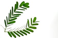 Free Green Leaf Stock Photo - 16488730