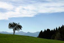 Free Single Tree Stock Image - 16489051