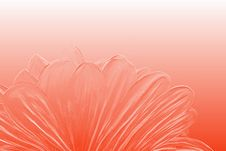 Tender Red Flower Closeup Stock Photo
