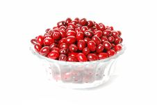 Free Dogwood Berries On A Plate Royalty Free Stock Photos - 16489668