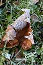 Free Frozen Leaf Stock Photo - 16490050