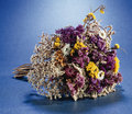 Free Dried Flowers Royalty Free Stock Image - 16496276
