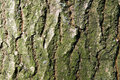 Free Tree Trunk Background Royalty Free Stock Photo - 16498555