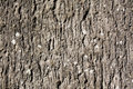 Free Concrete Wall Background Royalty Free Stock Images - 16498619