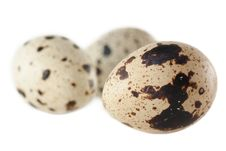 Free Quail Eggs Royalty Free Stock Photos - 16490078