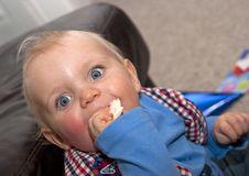 Free Baby First Birthday Sandwich Stock Photo - 16490340
