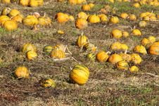 Free Pumpkin Patch Stock Image - 16490771