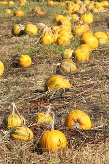 Free Pumpkin Patch Stock Photos - 16490863