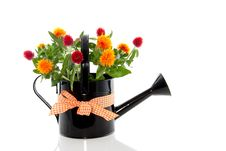 Free Orange Red Bouquet Royalty Free Stock Image - 16490986