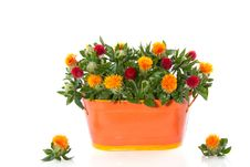 Free Red Orange Flower Bouquet Stock Photography - 16491042