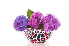 Free Colorful Purple Blue Hydrangena Stock Image - 16491231