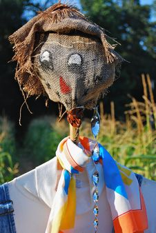 Free Scarecrow Guarding Cornfield Stock Images - 16491564