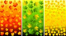Free Set Of Backgrounds With Autumnal Leaves. Royalty Free Stock Photography - 16494507
