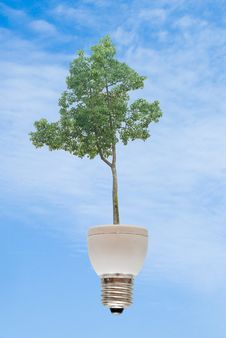 Free Tree Growing From Fluorescent Lamp Royalty Free Stock Images - 16494949