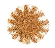 Free Starfish Royalty Free Stock Photo - 16495245