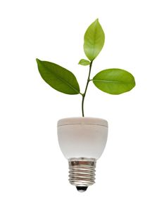 Free Tree Growing From Fluorescent Lamp Royalty Free Stock Photo - 16495585