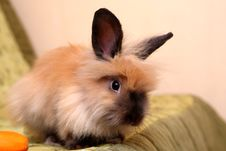 Free Rabbit And Boy Stock Photography - 16496492