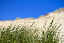 Free Grass In Front Of Dune Royalty Free Stock Image - 16497156