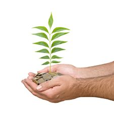 Free Hand With A Tree Growing From Coins Stock Images - 16497654