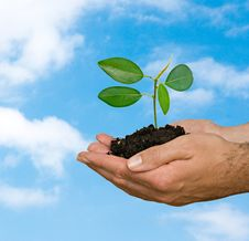 Free Sprout In Hands As A Symbol Of Nature Protection Stock Photos - 16497823