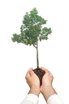 Free Tree In Hands Stock Photography - 16498062