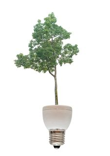 Free Tree Growing From  Fluorescent Lamp Stock Photos - 16498073