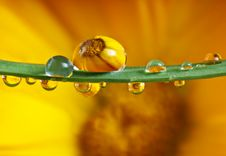 Free Pot Marigold Inside Dew Drops Stock Photo - 16498180