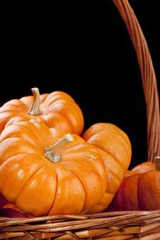 Free Pumpkins Stock Images - 16499384