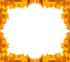 Free Golden Maple Foliage Frame Royalty Free Stock Image - 16499606