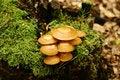 Free Fungus Royalty Free Stock Image - 1653726