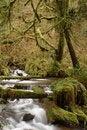 Free Munson Creek Rainforest Royalty Free Stock Image - 1655036