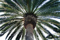Free Palm Tree Royalty Free Stock Images - 1656349