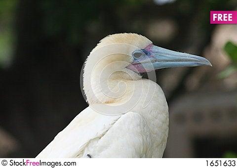 Free White Bird Stock Photos - 1651633