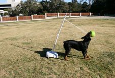 Free Rottweiler Tetherball Stock Photo - 1651500